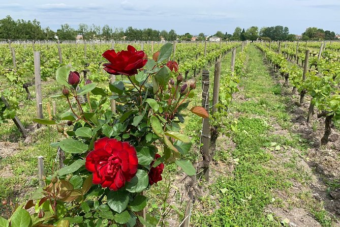 Private tour in the Sauternes wine region - discover Bordeaux sweet Crus Classés photo 10