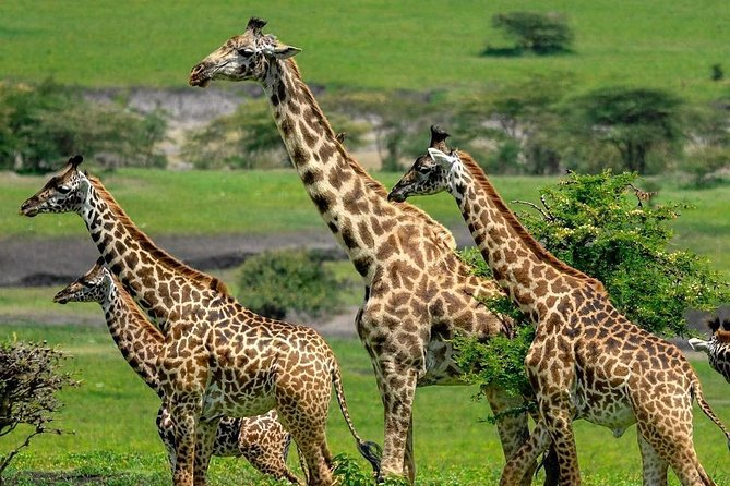 2 Days Mid - Range Lodge Safari To Tarangire / Lake Manyara & Ngorongoro Crater