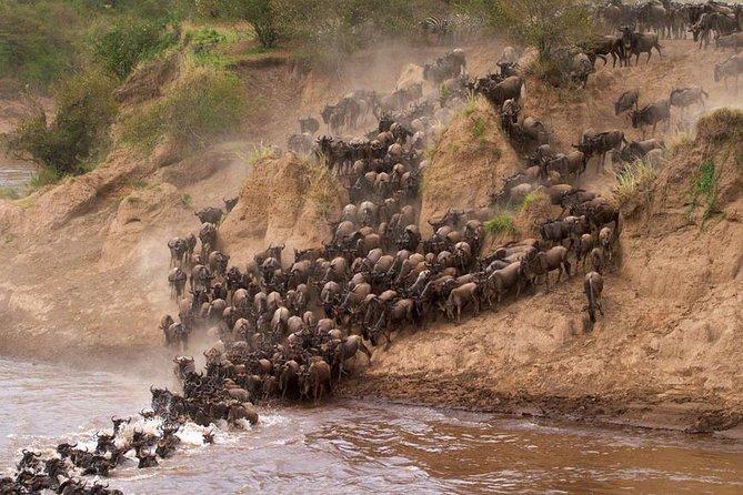 2 days group joining masai mara tour