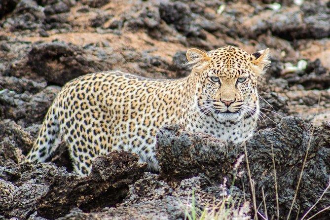 Tsavo East & West 3 Days 2 Nights Safari