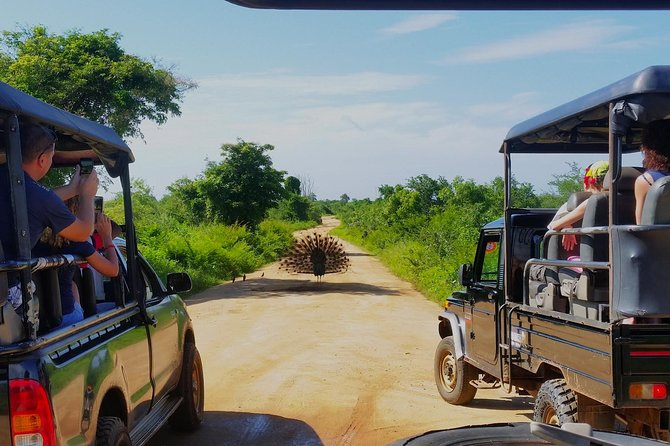 Afternoon Safari at Udawalawe National Park photo 8