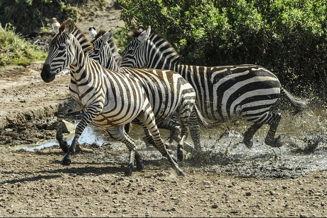 4 Days Luxury Lodge Safari Tour Tanzania photo 7