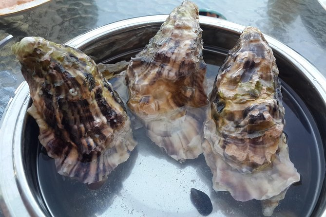 Black sea oysters tour