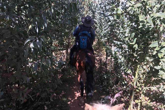 Horseback Riding in Cusco: Sacred Valley of the Incas