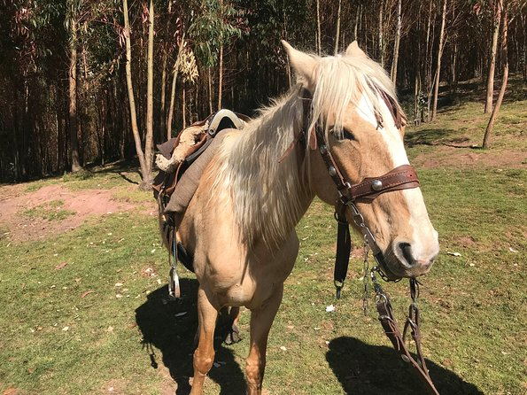 Half-Day Horseback Riding Tour from Cusco photo 19