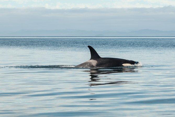 Marine wildlife viewing tour