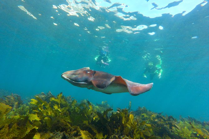 Manly Snorkel Tour + Beyond Manly Half Day Adventure with City pick up
