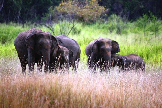 Afternoon Safari to Maduru Oya National Park