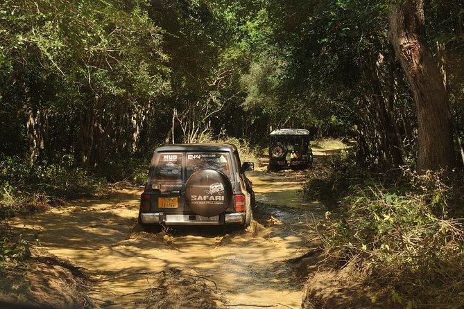 Afternoon Safari to Wilpattu National Park