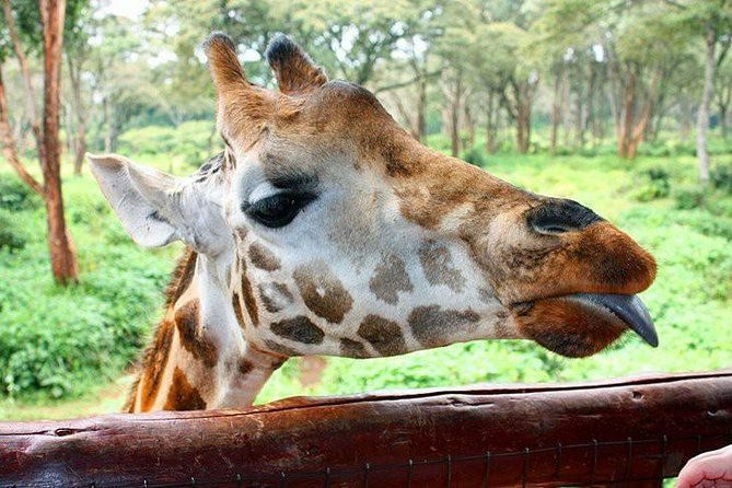 Full Day Nairobi City Excursion