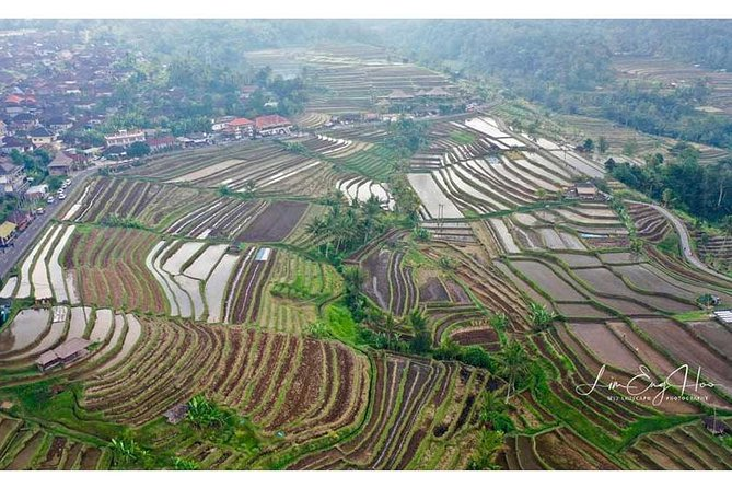 JatiLuwih Rice Terrace Tour With Hotel Transfer & Entrance Ticket