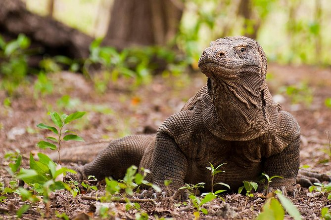 Explore Komodo Flores Through Bali (3D/2N)