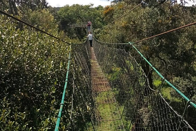 Ngare Ndare Forest Excursion