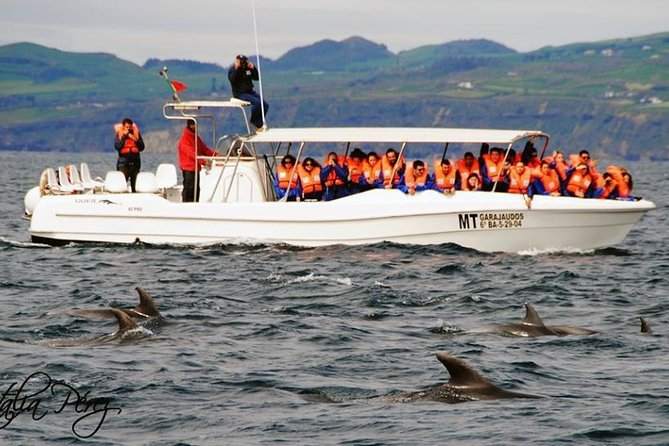 Half-Day Whale and Dolphin Watching Tour in Ponta Delgada