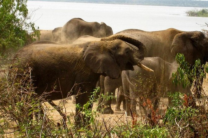 2 Day Big Five Safari To Murchison Falls National Park