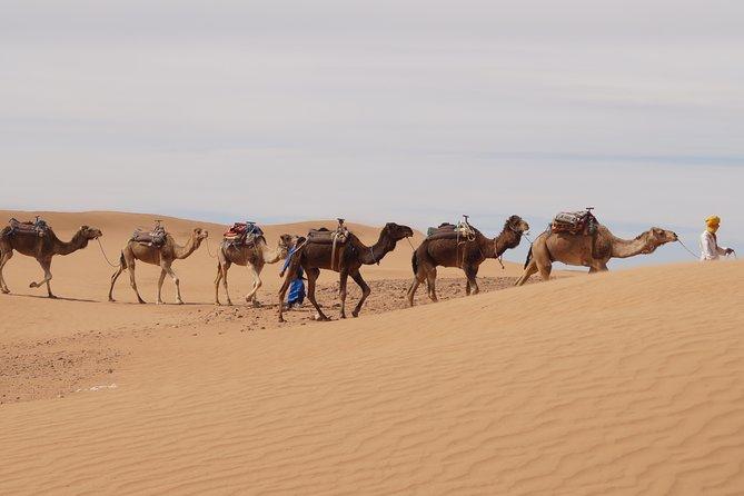 3 nights / 4 days, Zagora and Erg Chegaga tour in Sahara