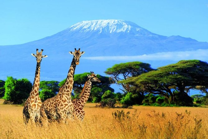 Kilimanjaro Special-( Tsavo West, Amboseli & Tsavo East Luxury Safari)