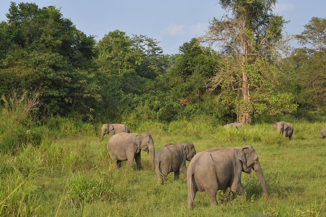 Wild Life Safari Tour in Maduru Oya National Park