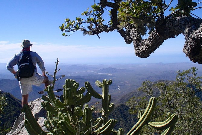2-night Luxury Tent Camping in Sierra La Laguna Mountains Near Todos Santos