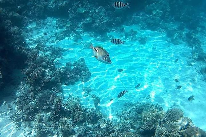 Snorkeling by boat to Ras Mohamed in Sharm el sheikh photo 3