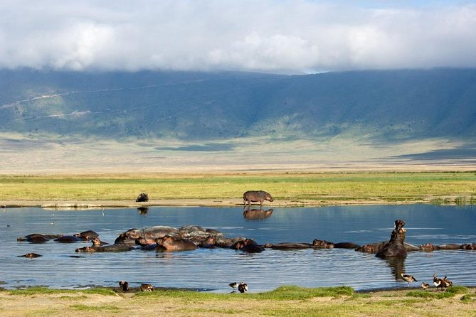 Amazing 2 days visit Tarangire park and Ngorongoro Crater photo 2