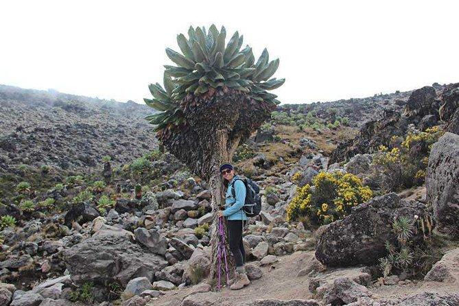 Mount Kilimanjaro Trekking - 7 Days Rongai Route.