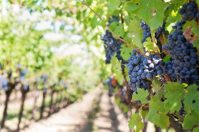 Emilia Romagna Wine Tasting Tour