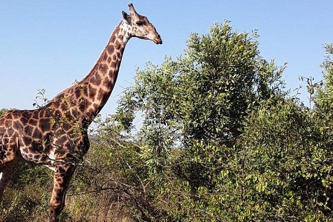 Durban Day Safari