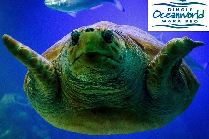 Evita las colas: entrada a Dingle Oceanworld