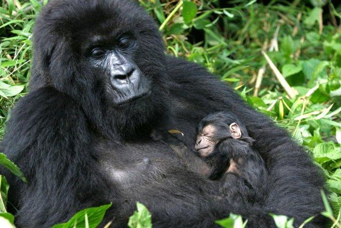 3 days Gorilla Trekking Bwindi