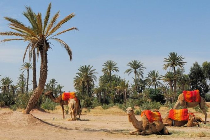 Camel ride in the Palm groove