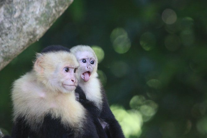 Manuel Antonio National Park Tour with pick up included