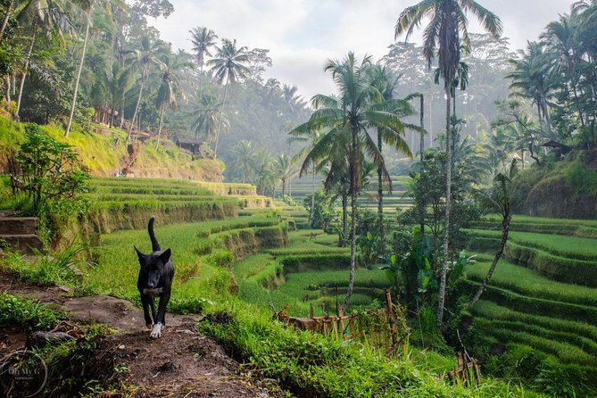 Private : Bali Morning Trip with Hidden Village visit.
