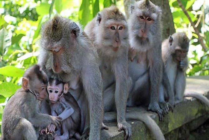 Bali Ubud & Uluwatu Private Tour