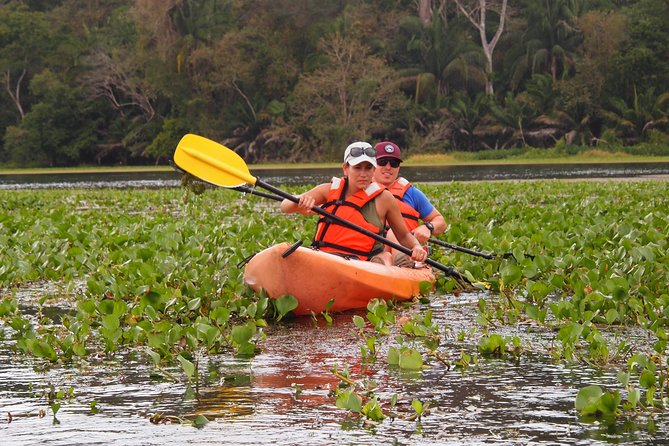 Private Kayaking tour in the Chagres River