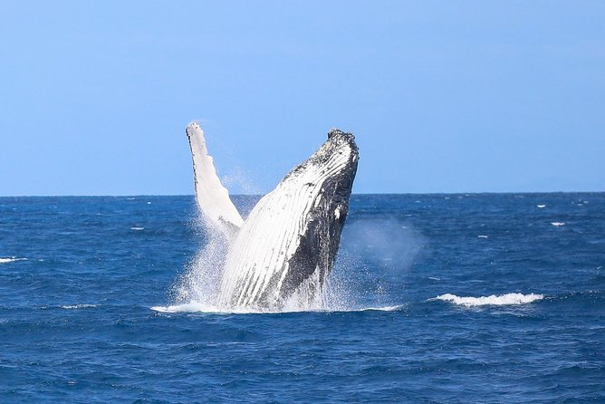 Whale Watching Tours on Fitzroy Island, Cairns
