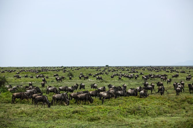 2 Days Safari: Mto Wa Mbu Cultural Tour & Ngorongoro Crater