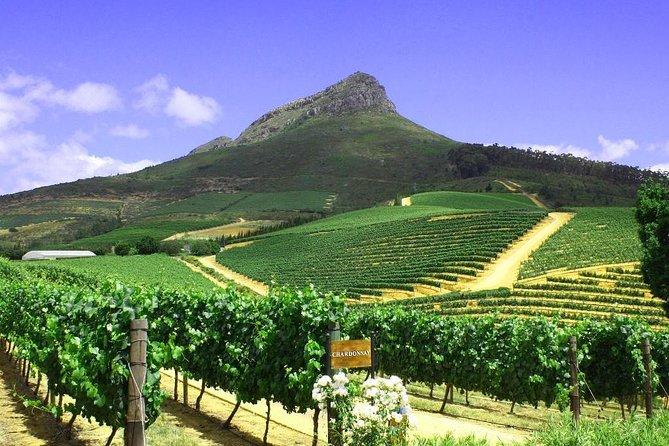 Cape Town Wine-Lands Tour