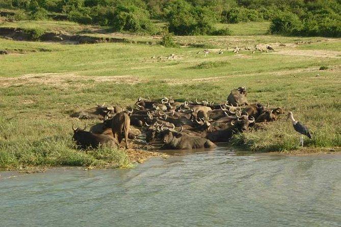 Unforgettable safari to Uganda's Queen Elizabeth National Park