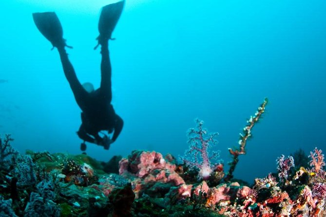 Scuba Diving ( one try dive depth 6 meters and snorkeling ) from Pattaya