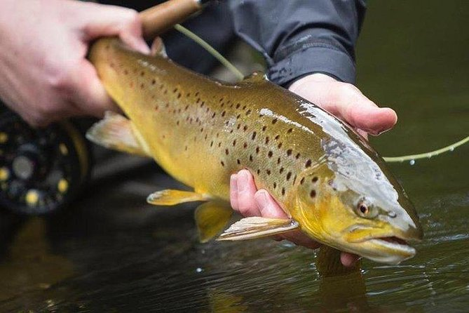 Wild Brown Trout fishing. Lough Corrib. French speaking Ghillie/Guide. Full day.