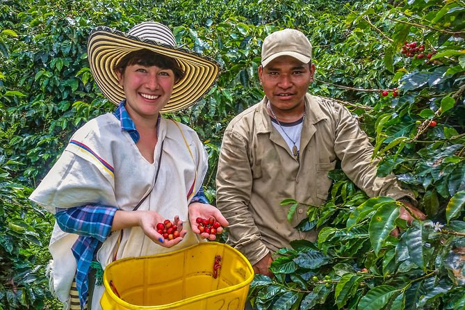 Coffee Tour - Taste And Live The Authentic Colombian Coffee Experience