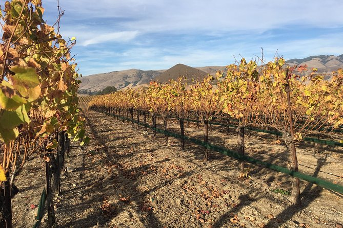 Ultimate Wine Experience in San Luis Obispo from Pismo Beach