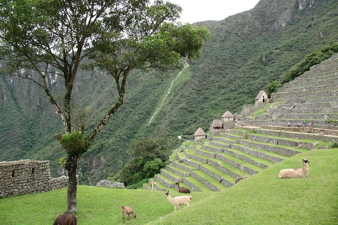 9-Day Inca Path Tour from Lima Including Sacred Valley and Inca Trail photo 8
