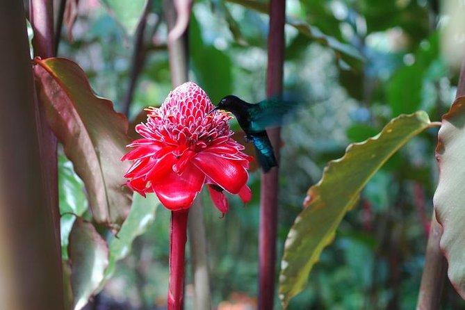 Admission Ticket Balata's Garden