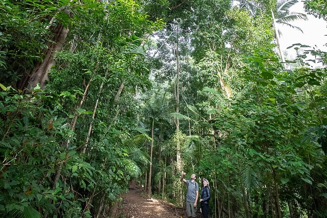 Whitsundays Tropical Rainforest, Waterfalls and Airlie Beach Eco Experience