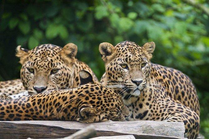 Explore the thrilling Wild life of Sri Lanka