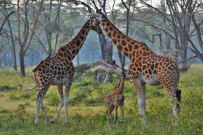 4 Days Serengeti Luxury Safari