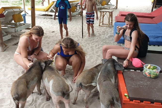 Snorkeling & Pig Island Experience photo 21