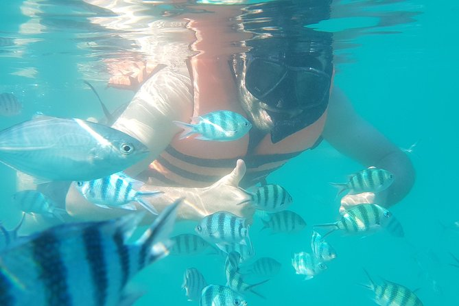 Snorkeling & Pig Island Experience photo 4